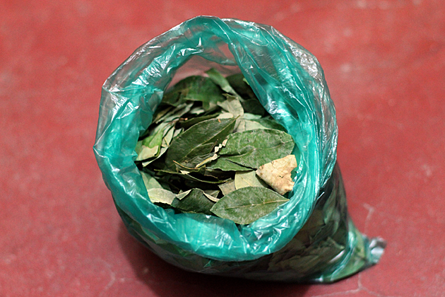 How to Chew Coca Leaves And The Benefits - Bolivia For 91 Days